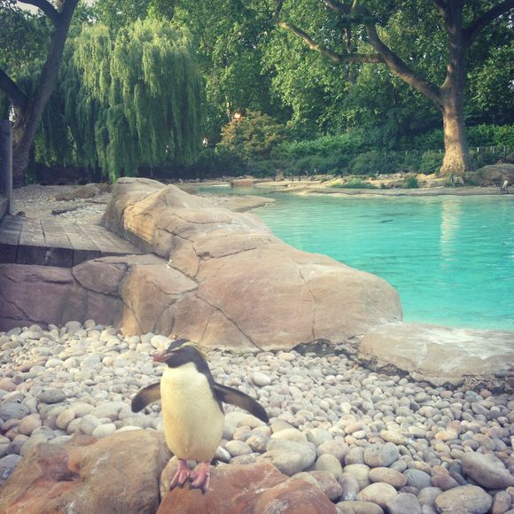Prosecco and Penguins at London Zoo